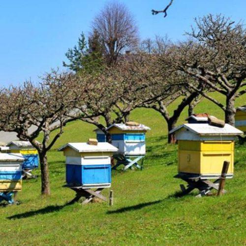 Π.Ε. Ημαθίας. Αίτηση διαχείμασης κυψελών και συμμετοχή των μελισσοκόμων της Ημαθίας σε ενισχυτικές δράσεις