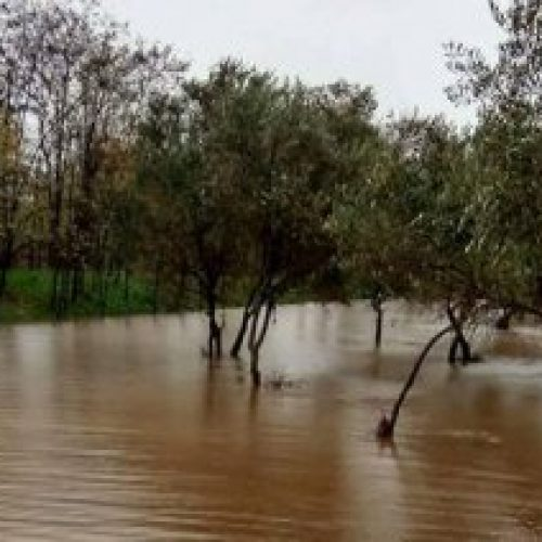 """Απ. Βεσυρόπουλος: """"Αδικαιολόγητη ολιγωρία από την κυβέρνηση στην καταβολή αποζημιώσεων στους αγρότες"""""""