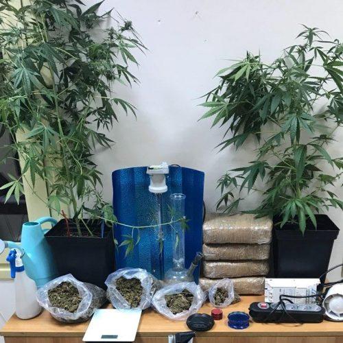 Συνελήφθησαν 3 άτομα για διακίνηση και καλλιέργεια κάνναβης