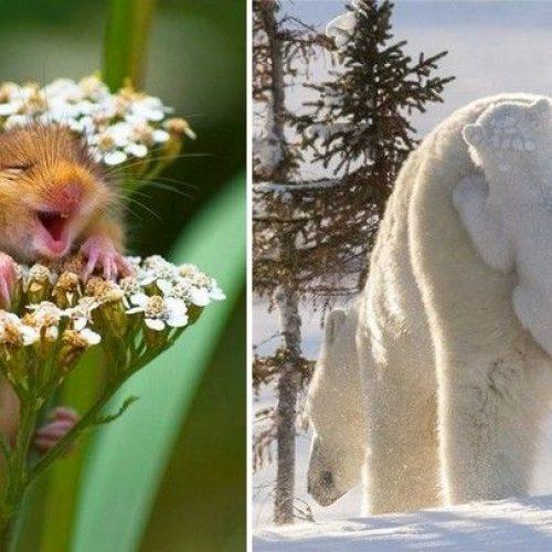 Φωτογραφίες της  άγριας φύσης 2017 που ξεχώρισαν σε  διεθνή διαγωνισμό