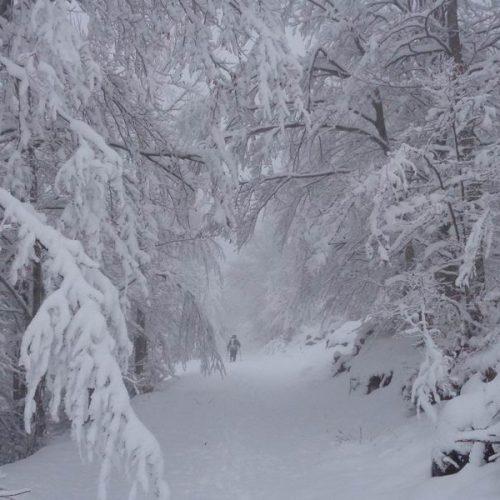 """Εικόνες παραμυθιού στο χιονισμένο Βέρμιο για την Ορειβατική Ομάδα Βέροιας """"Τοτός"""""""
