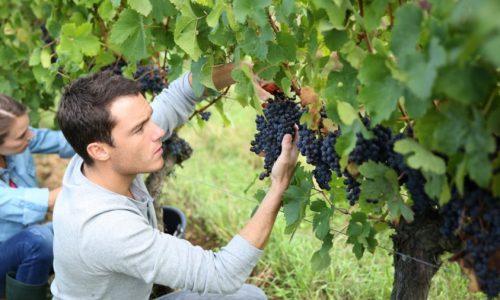 """Απ. Βεσυρόπουλος: """"Η κυβέρνηση   οφείλει επιτέλους να συμπεριφερθεί ισότιμα στους αγρότες"""""""