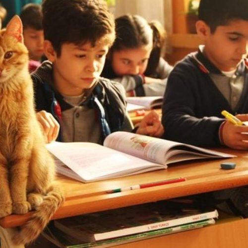 """Ο πορτοκαλί γάτος - """"μαθητής"""" και η τάξη που τον υιοθέτησε"""