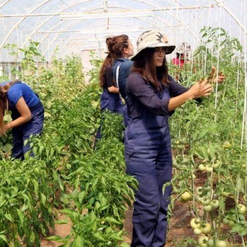 Όλοι οι επιλαχόντες σε όλη τη χώρα εντάσσονται στο Πρόγραμμα των Νέων Αγροτών
