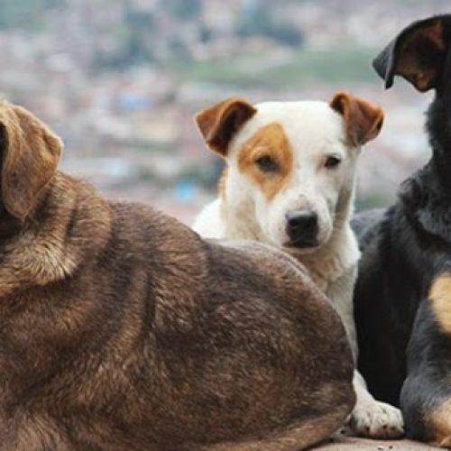 Στην πρώτη πεντάδα στην Ελλάδα ο Δήμος Βέροιας στις δαπάνες διαχείρισης αδέσποτων ζώων συντροφιάς