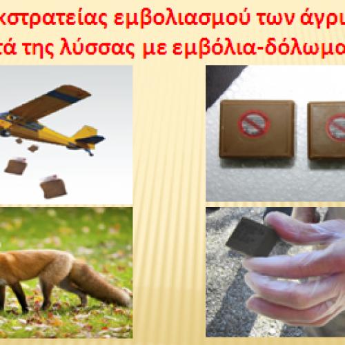 Π.Ε. Ημαθίας: Εναέρια ρίψη εμβολίων-δολωμάτων κατά της λύσσας των άγριων ζώων από τις 18 έως της 28 Απριλίου