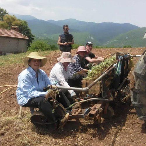 Φυτεύοντας Τσάι Ολύμπου στο Ελατοχώρι Πιερίας