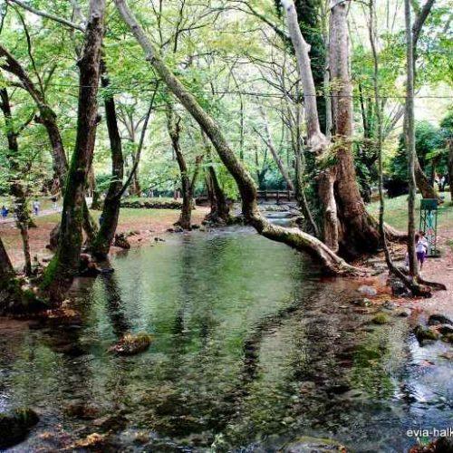 Φιλόξενος χώρος το άλσος    Άγιος Νικόλαος Νάουσας την Πρωτομαγιά