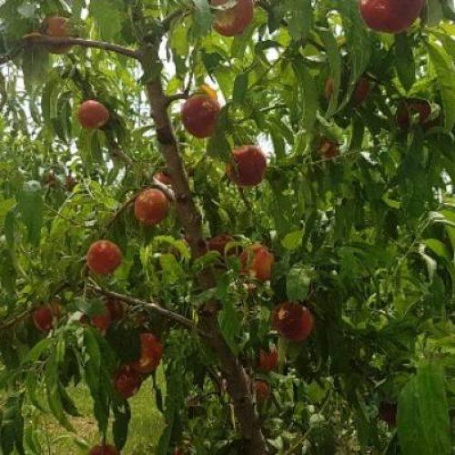 Αναγγελία Ζημίας  από βροχόπτωση στο Δήμο Βέροιας