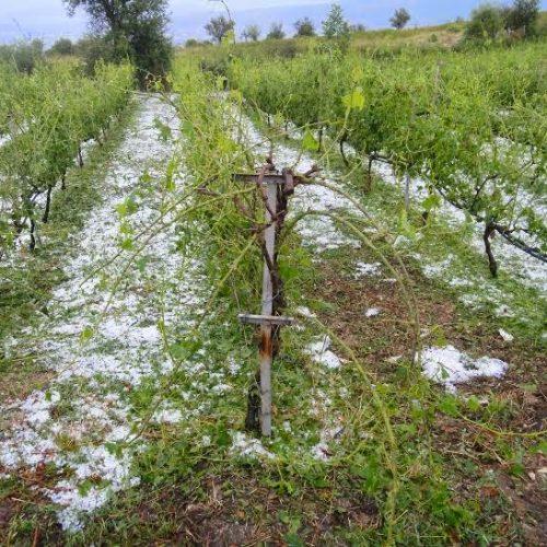 Αναγγελία ζημιάς από βροχή και χαλάζι στο Δήμο Βέροιας