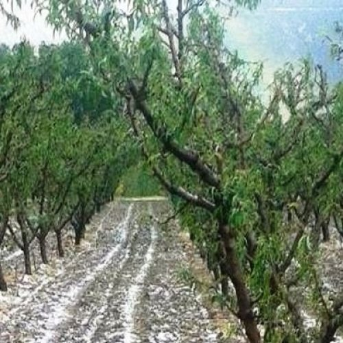 Αναγγελία Ζημιάς από χαλαζόπτωση στο Δήμο Βέροιας