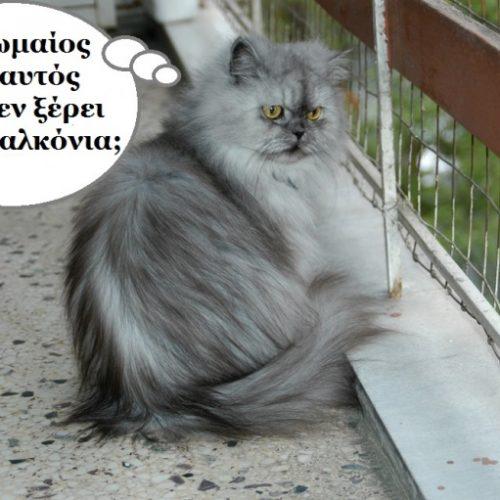 Και η Ιουλιέττα περιμένει ακόμα...  Η αληθινή ιστορία ενός γάτου