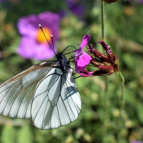 """Παγώνοντας το χρόνο -  Μεταξία Φωτίου """"Πεταλούδες στο Οροπέδιο Γρεβενών"""""""