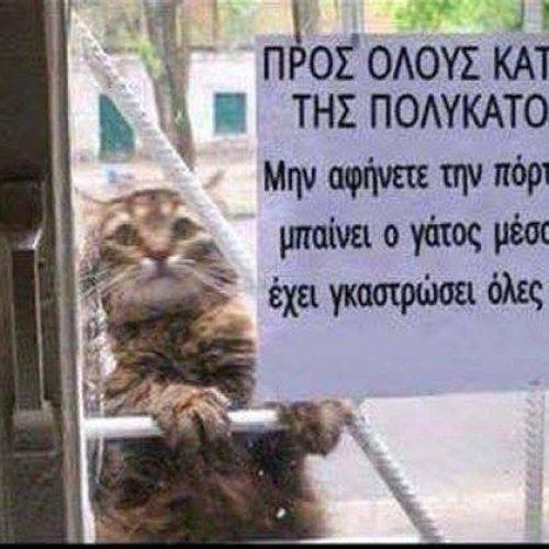 """Ο """"επικίνδυνος""""… γάτος!"""