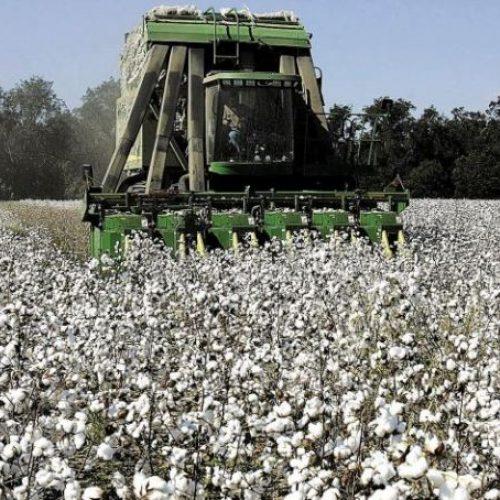 Π.Ε. Ημαθίας: Δελτίο γεωργικών προειδοποιήσεων ολοκληρωμένης φυτοπροστασίας στην βαμβακοκαλλιέργεια της  Ημαθίας