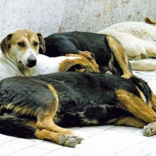 Επανένταξη των αδέσποτων σκυλιών στα γύρω χωριά;