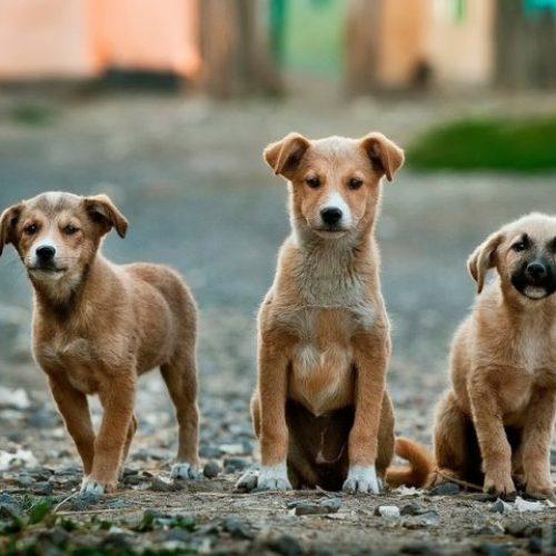 Ο Δήμος Βέροιας για τα αδέσποτα ζώα