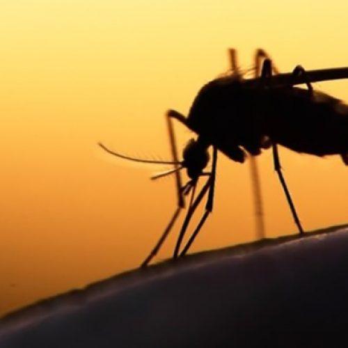 Κουνούπια στη Βέροια! Κάθε χρόνο και χειρότερα!