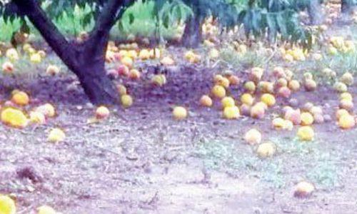Οι αποζημιώσεις του ΕΛΓΑ ανά είδος καλλιέργειας
