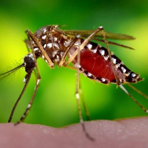 Η Π.Ε. Ημαθίας για τον ιό του Δυτικού Νείλου