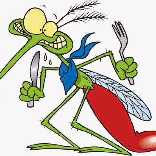 """""""Γιατί αυτή η εισβολή των κουνουπιών; Τι φταίει;"""" γράφει ο Τεύκρος"""