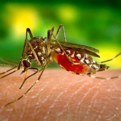 Η Λαϊκή Συσπείρωση σχετικά με την     καταπολέμηση των  κουνουπιών στην  Κ. Μακεδονία