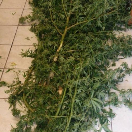 Συλλήψεις για ναρκωτικά  από αστυνομικούς του Τ. Α. Αλεξάνδρειας