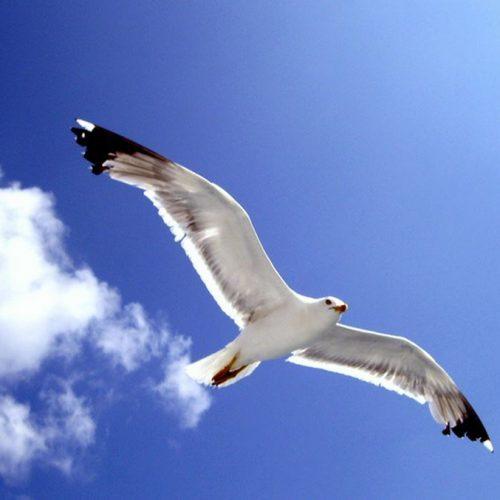 Τα φτερά του γλάρου - Αποχαιρετισμός