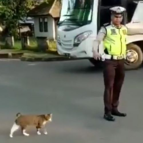 Σεβασμός στα ζώα. Κι ο γάτος από τη... διάβαση - Ένα εντυπωσιακό video