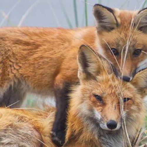 Η τοποθεσίες ρίψης εμβολίων κατά της λύσσας των άγριων ζώων στην Ημαθία