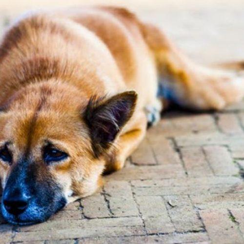 Μηνυτήρια αναφορά από το Δήμο Βέροιας για τη θανάτωση   ζώων συντροφιάς