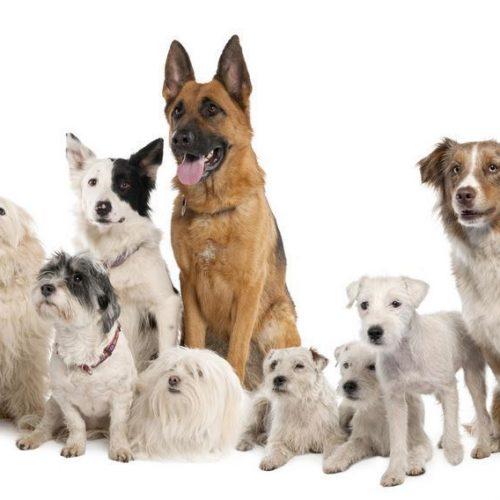 """Φιλοζωικός Όμιλος Ημαθίας:  """"Μπάτε σκύλοι, αλέστε…"""""""