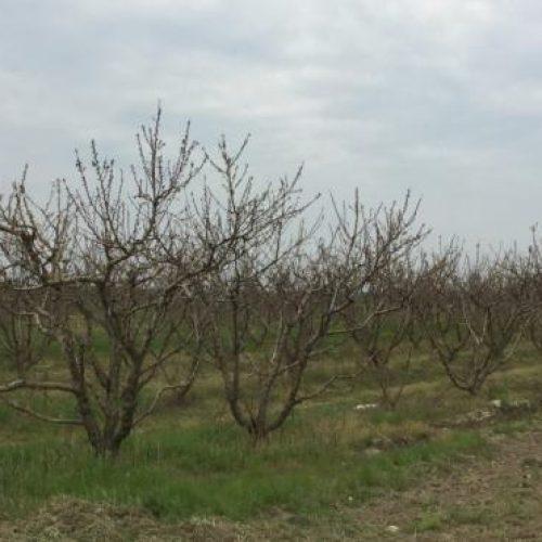 Απ. Βεσυρόπουλος: Εμπαίζει η κυβέρνηση τους δενδροκαλλιεργητές της Ημαθίας που οι καλλιέργειες τους ξεράθηκαν