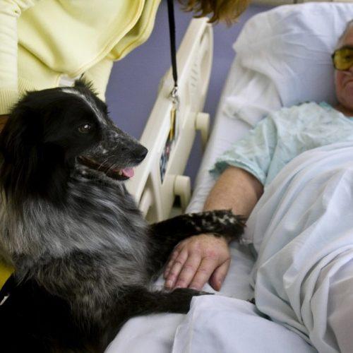 Σκύλοι - ψυχοθεραπευτές στο  424 Στρατιωτικό Νοσοκομείο  Θεσσαλονίκης!