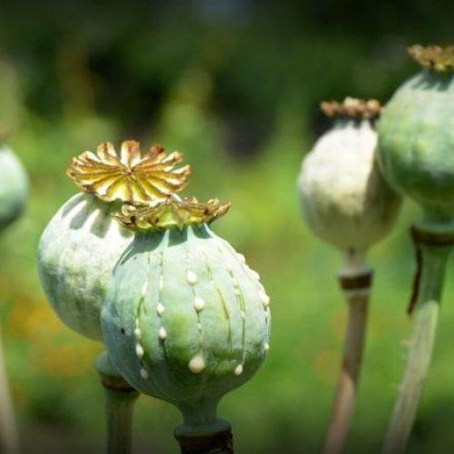 """ΑΣΕ - ΠΑΜΕ Ημαθίας: """"Η έκθεση του ΟΗΕ για τα ναρκωτικά..."""""""