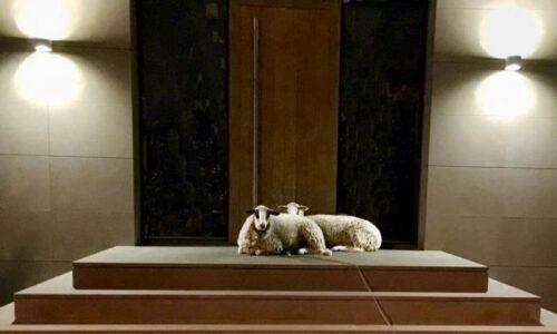 """Εγκαίνια έκθεσης στη γκαλερί """"Παπατζίκου"""": Έβελυν Wallner Παπαδοπούλου """"Από την ύλη στο άυλο"""""""