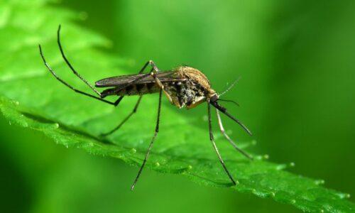 Πρόσκληση σε σύσκεψη για τα κουνούπια στο Δήμο Βέροιας