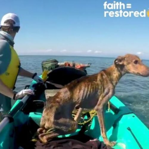 Βρήκε σκύλο - ναυαγό στη μέση του Ατλαντικού και τον έσωσε – Το συγκινητικό video της διάσωσης