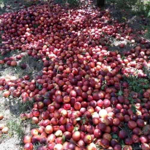 """Αγροτικός Σύλλογος Ημαθίας: """"Ο κ.  Αραχωβίτης ήρθε, είδε και απήλθε"""""""