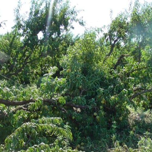 Αιτήματα του Αγροτικού Συλλόγου Ημαθίας για μέτρα στήριξης των πληγέντων παραγωγών