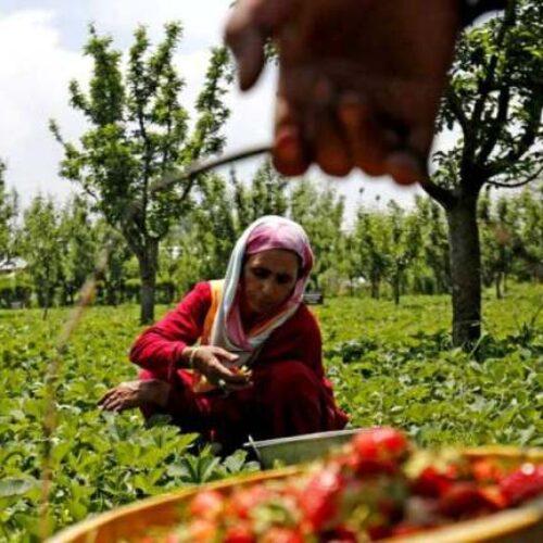 """Αφαιρούν τη μήτρα από γυναίκες στην Ινδία """"για να είναι πιο παραγωγικές""""!"""