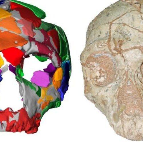 Στην Ελλάδα βρέθηκε το αρχαιότερο κρανίο Homo sapiens στην Ευρασία