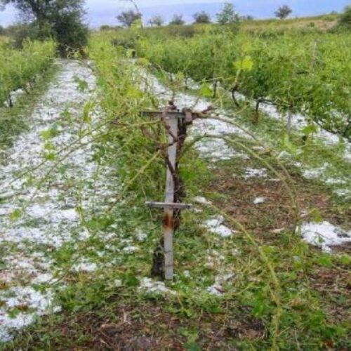"""Ο Αγροτικός Σύλλογος Νάουσας """"Μαρίνος Αντύπας"""" για την ισχυρή χαλαζόπτωση που έπληξε τις καλλιέργειες"""