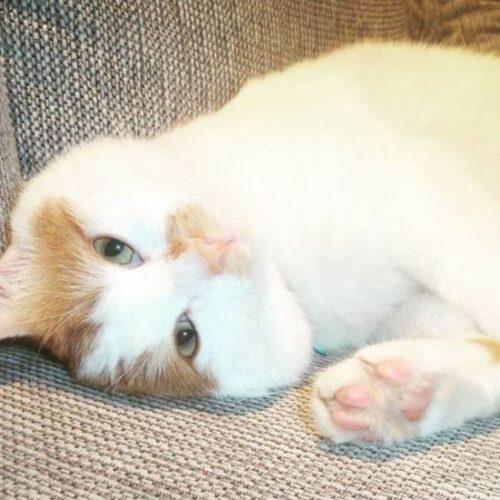 Παγκόσμια Ημέρα Γάτας - Ο... σύρος γάτος πρόσφυγας της Ειδομένης ζει πλέον ξέγνοιαστος στη Σουηδία