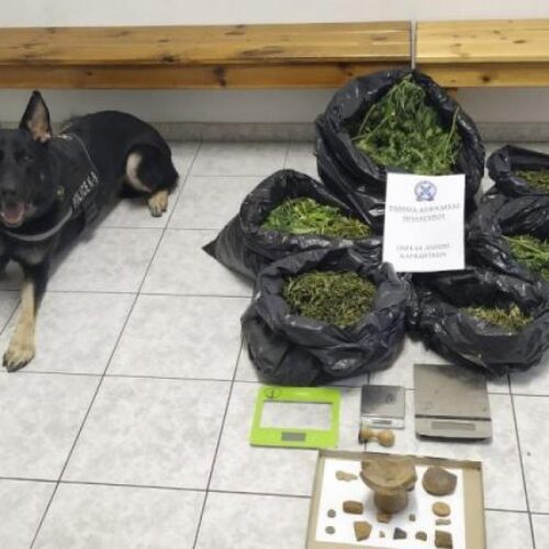 Με τη συνδρομή αστυνομικού σκύλου εντοπίστηκαν πάνω από 7 κιλά κάνναβη σε ποιμνιοστάσιο