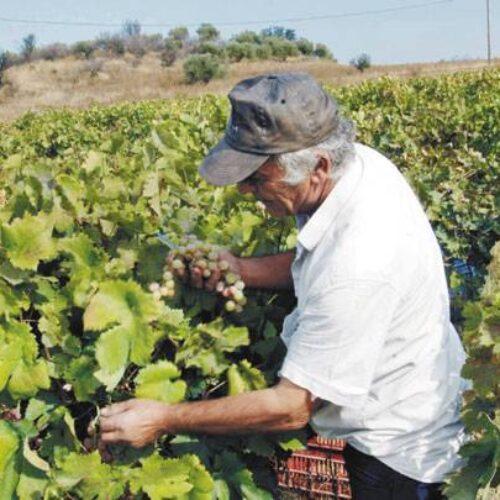 """Φρ. Καρασαρλίδου: """"Πλήρης η εγκατάλειψη των αγροτών από την κυβέρνηση Μητσοτάκη"""""""