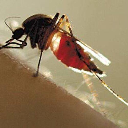 Επαναληπτικός ψεκασμός  στον οικισμό Μέσης κατά των  κουνουπιών, Τετάρτη 18 Σεπτεμβρίου
