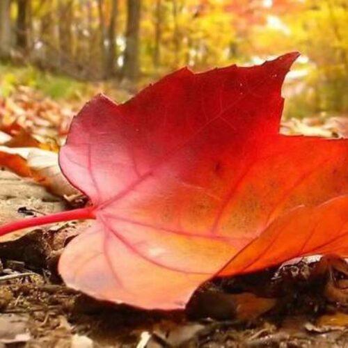 Φθινοπωρινό το σκηνικό του καιρού -  Σε πτώση η θερμοκρασία