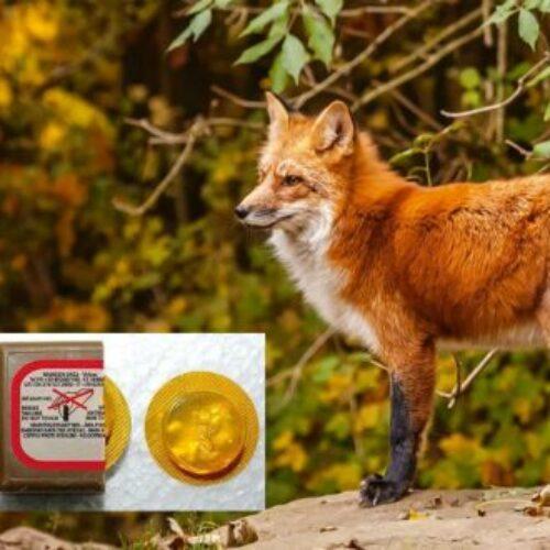Εναέρια  ρίψη δολωμάτων κατά της λύσσας άγριων ζώων σε περιοχές της Ημαθίας