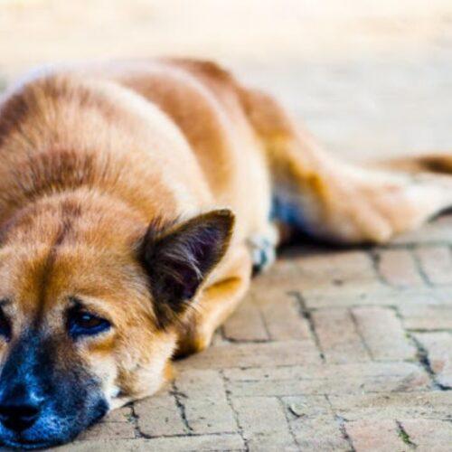 Πρόσκληση σε συγκέντρωση στην Πλατεία Δημαρχείου της Βέροιας ενάντια στην κακοποίηση και τη θανάτωση αθώων ζώων